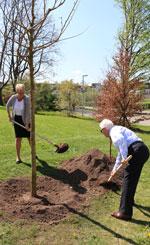 Maulbeerbaumpflanung im Hain der Kulturen am 10.04.2017
