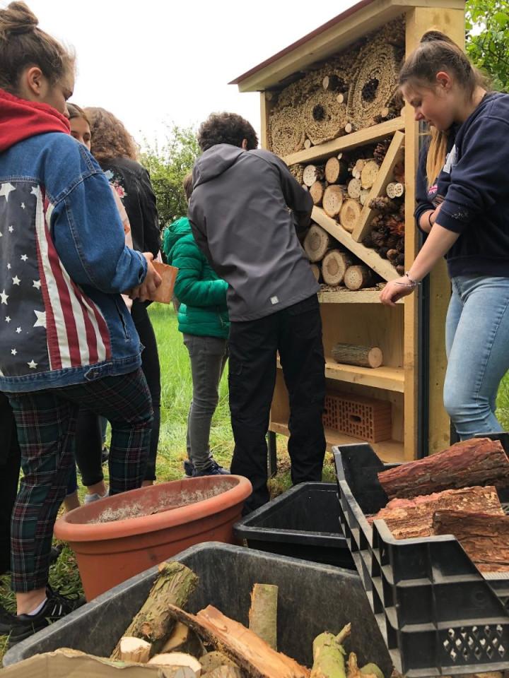 Fünf Neuntklässler der Freihof-Realschule richten das Insektenhotel ein. Im Vordergrund liegen die Materialien dafür bereit.