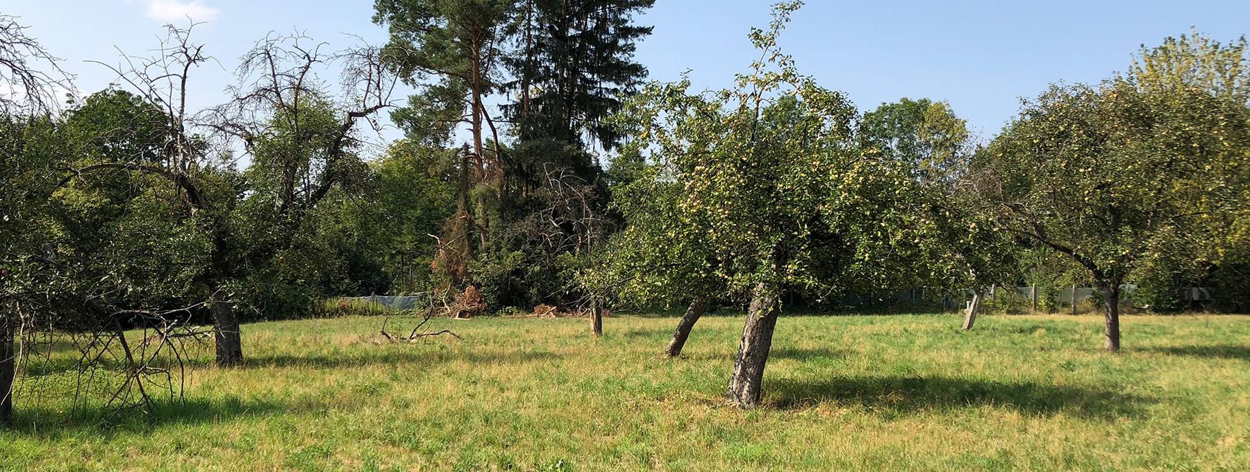 Eine Streuobstwiese in Kirchheim unter Teck
