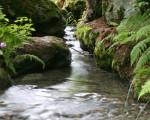 Bachlauf durch einen Wald umrahmt von Farn