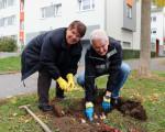 Zwei Ehrenamtliche Helfer bei der Narzissen-Pflanzaktion
