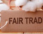 Eine Baumwollpflanze mit einem Fair Trade Schild