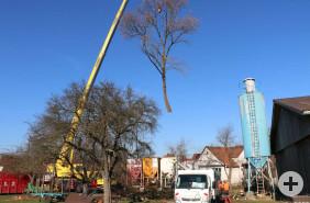 EIn Kran hebt einen gefällten Baum an der Naberner Gießnau am Haken