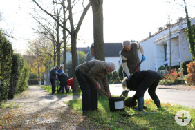 Ehrenamtliche Helfer pflanzen in kleinen Gruppen Tulpen- und Narzissen-Zwiebeln n der Eichendorffstraße..